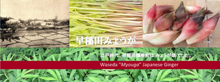 wasedamyouga_banner2.jpg